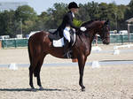 National Dressage and Jumping_18