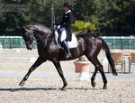 National Dressage and Jumping_24