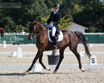 National Dressage and Jumping_44