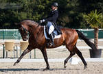 National Dressage and Jumping_124