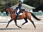 National Dressage and Jumping_127