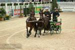 HorseCarriage_3
