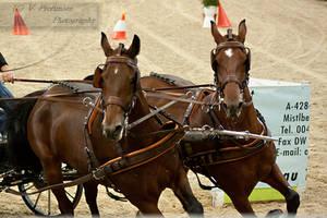 HorseCarriage_19 by CalyHoney