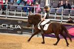 Hucul Pony_1