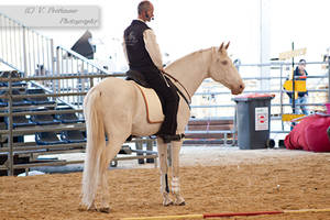 Cremello Lusitano_24 by CalyHoney