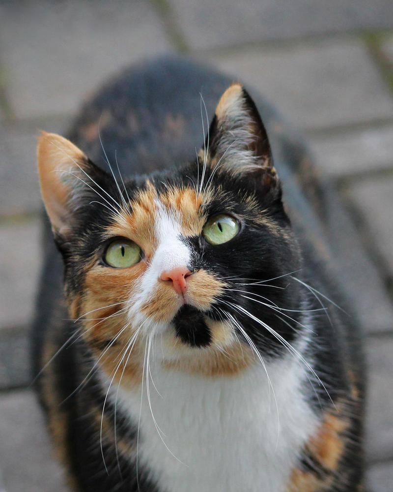 Cat by xLeane