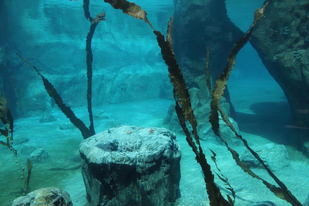 Underwater Seven by GhostlyHallow