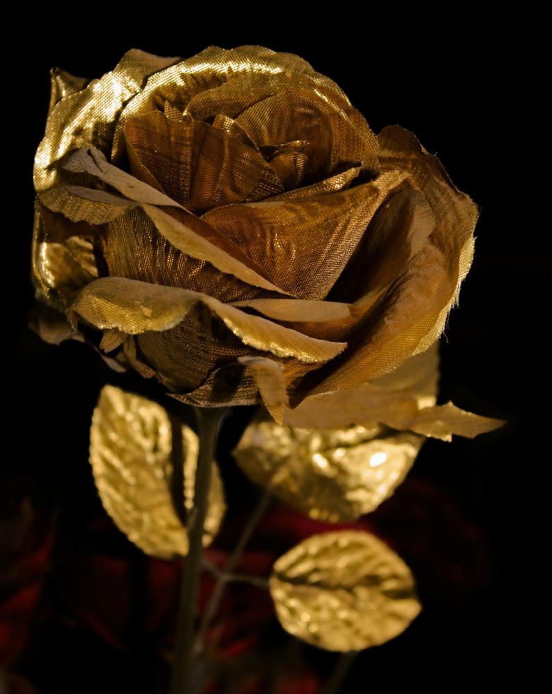 Golden Rose Wallpaper The Golden Rose by