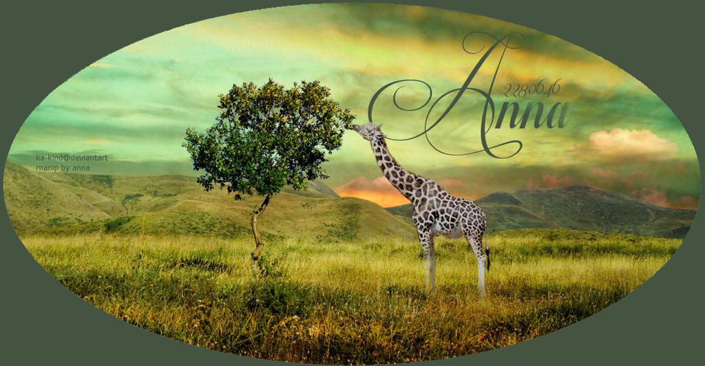 Giraffe Layout