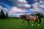 Warmblooded American