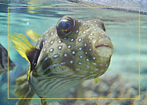 I 39 m a dork fish by polishlango on deviantart for Bill engvall dork fish