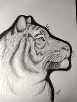 Bengal Tiger Sketch by CandidKit5
