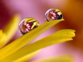 Double beauty by LiaCam