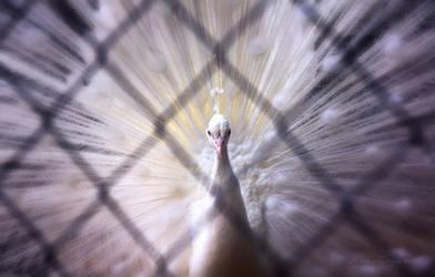 Love sentenced to captivity by LiaCam