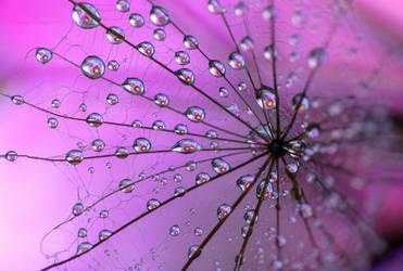 Flower web by LiaCam