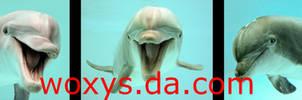 DOLPHIN MUG by woxys