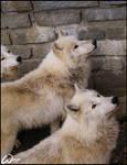 Curious trio