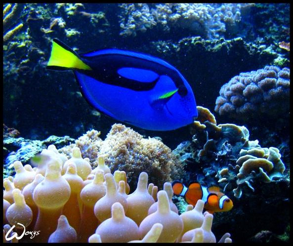 Marlin and Dory by woxys on DeviantArt