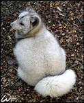I am not fat, I am just fluffy