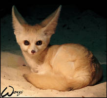 Fennec. To amuse you, Woxys
