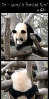 Baby panda is having fun