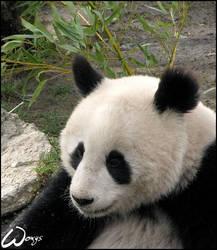 Is panda happy dragon?