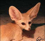 Fennec fox is not Vavra by woxys