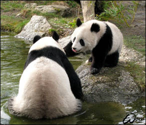 Giant and a baby panda