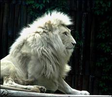 White lion Haldir by woxys