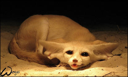 Fennec fox: cuteness song by woxys