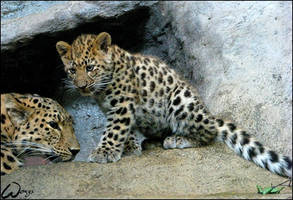 Extra rare baby Amur leopard by woxys