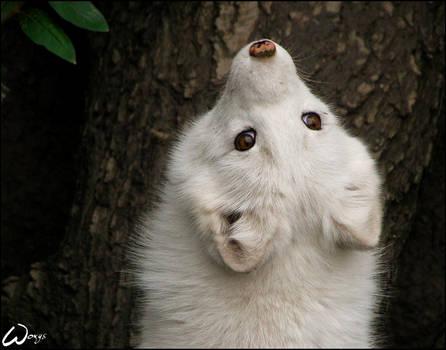 Baby fox: world upside down