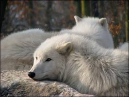 Sweet winter dreams by woxys