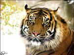 Snow suits to Sumatran tiger