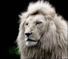 White lion called Haldir by woxys