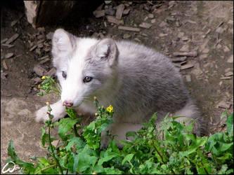 Vegetarian baby fox by woxys