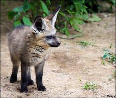 Grumpy baby fox: watching YOU by woxys
