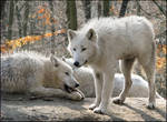 Wolf kids