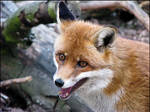 Guess what made the FOX laugh?