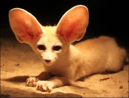 Fennec fox: like a good guy by woxys