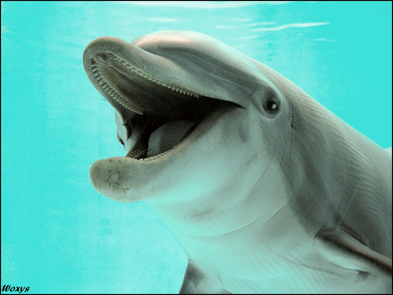 Dolphin eating yoooou by woxys on deviantart for Is a dolphin a fish