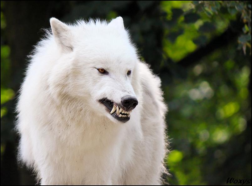 Bad mood, Atila? by woxys