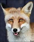 Foxy smile...