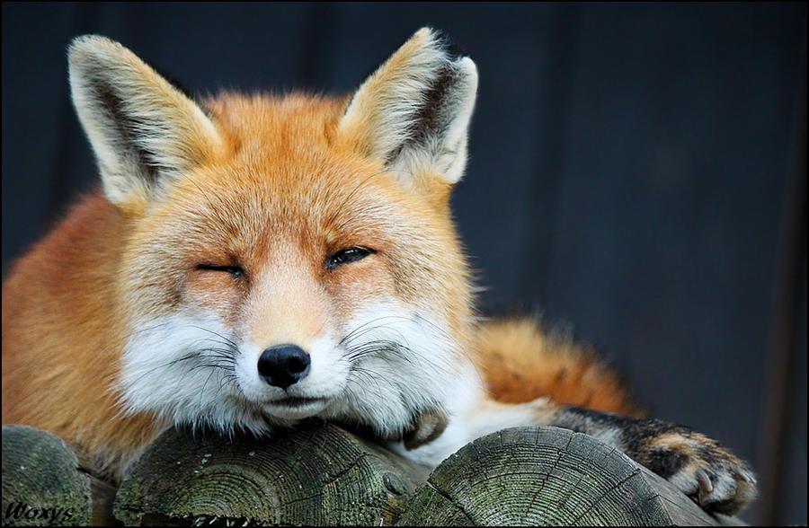 Sleepy by woxys