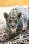 Cute baby hunter