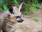 Baby fox is cute