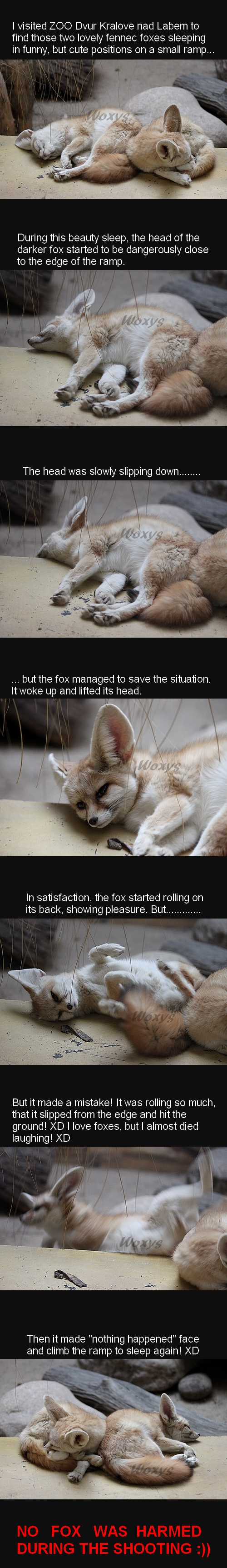 Terrible tragedy of fennec fox by woxys