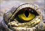 Golden eye of........... ?????