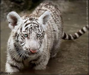 Baby tiger: ready for bath