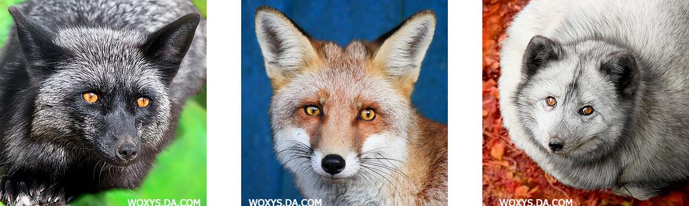 Colourful FOX mug